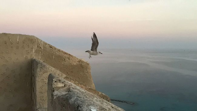 Vuelo de gaviota gull flight Hello World ocean Relaxing First Eyeem Photo Castillo De Santa Bárbara