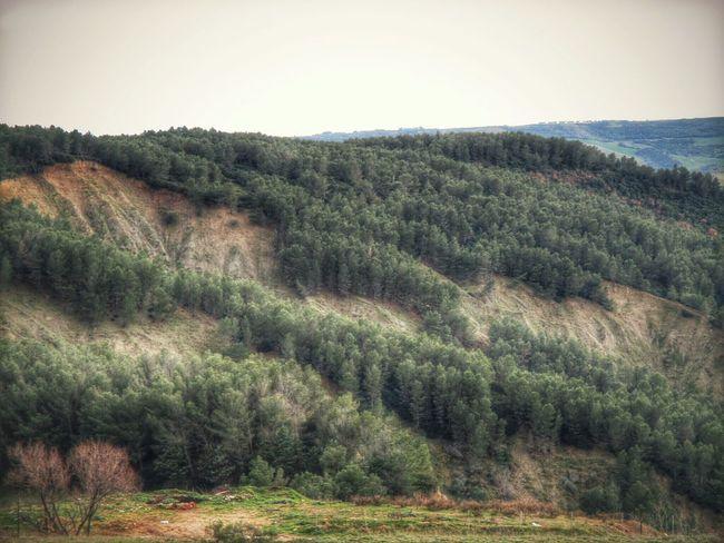 Chi decide di camminare nel bosco è in cerca di una libertà diversa, interiore, che lo renda padrone della sua vita, capace di agire come gli alberi e gli uccelli che vivono al di sopra di tutto. Il Bosco Incantato Selva Oscura Selva Magica Montescaglioso Basilicata, Italy  Green Nature