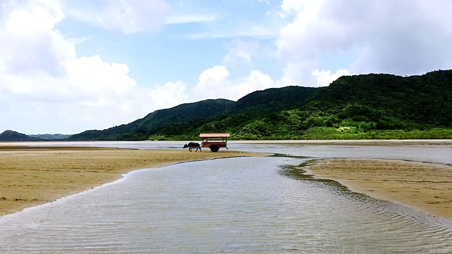 EyeEm Nature Lover EyeEm Best Shots in Iriomote Island Okinawa Japan Japan Photography Summer2015 沖縄 楽しいだけじゃなく、自然と人間を考える機会も、最高!