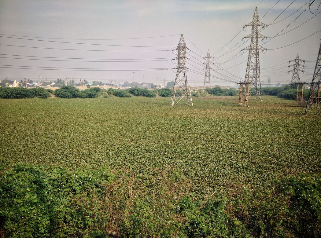 Scenics Beauty In Nature Growth Abundance Green Color Tranquility Nature Pylons And Powerlines Pylon Rural Scene