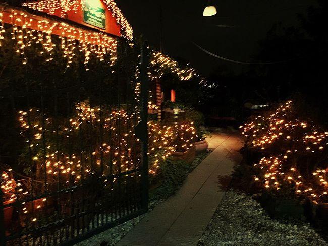 43 Golden Moments Fireflies Lights special Dinner