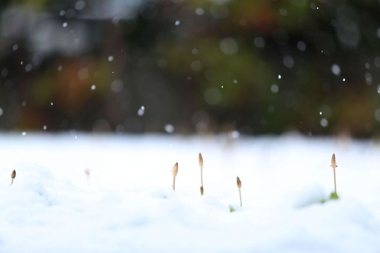 春の雪 Nature Spring Snow
