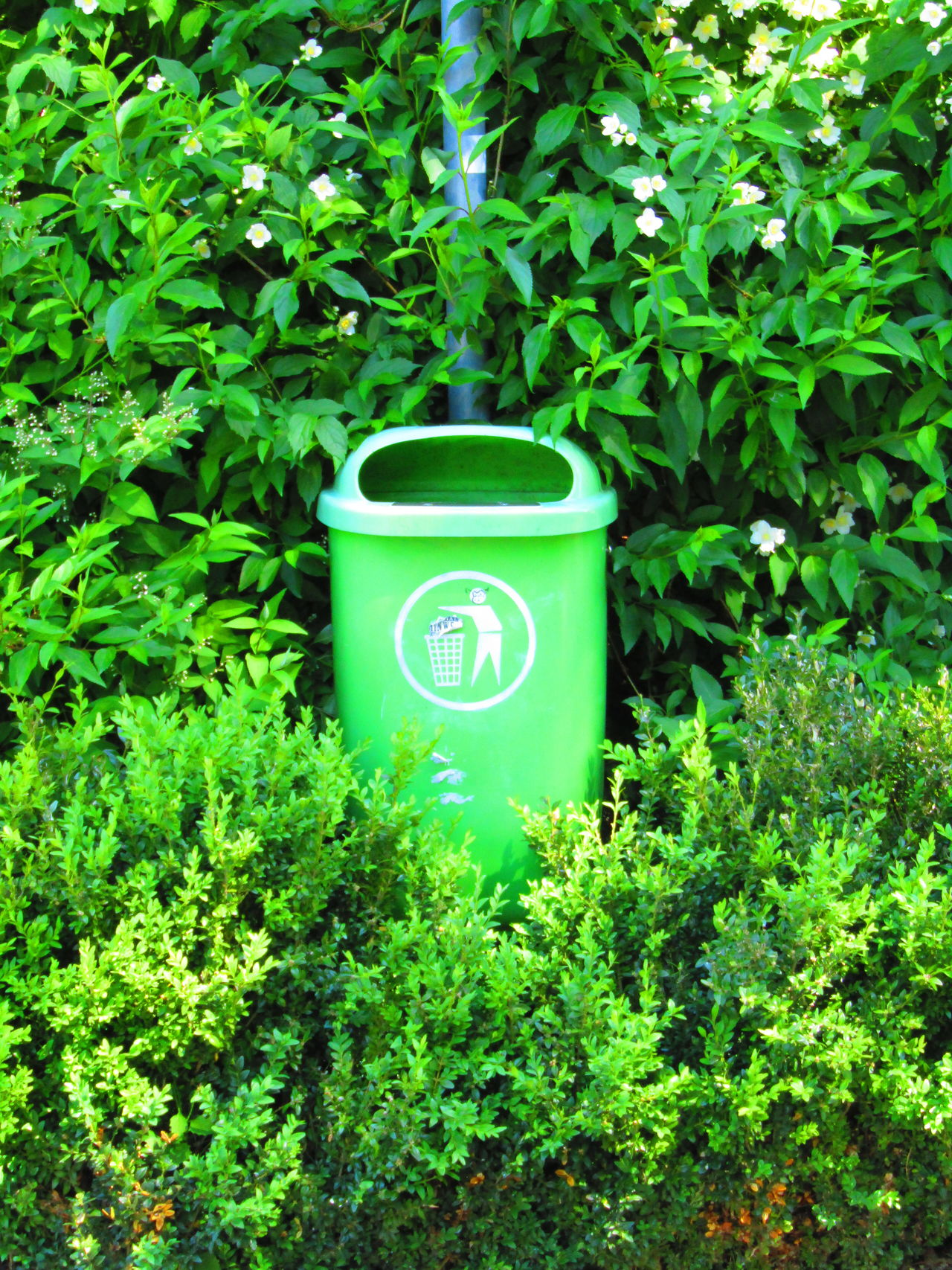 Mistkübel Trash Trashcan Green Color Growth Plant Day No People Nature Outdoors Freshness Austria Vienna Wien Rodaun
