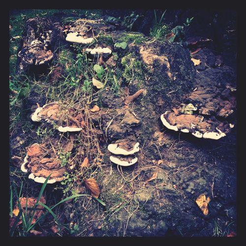 Wood&mushrooms