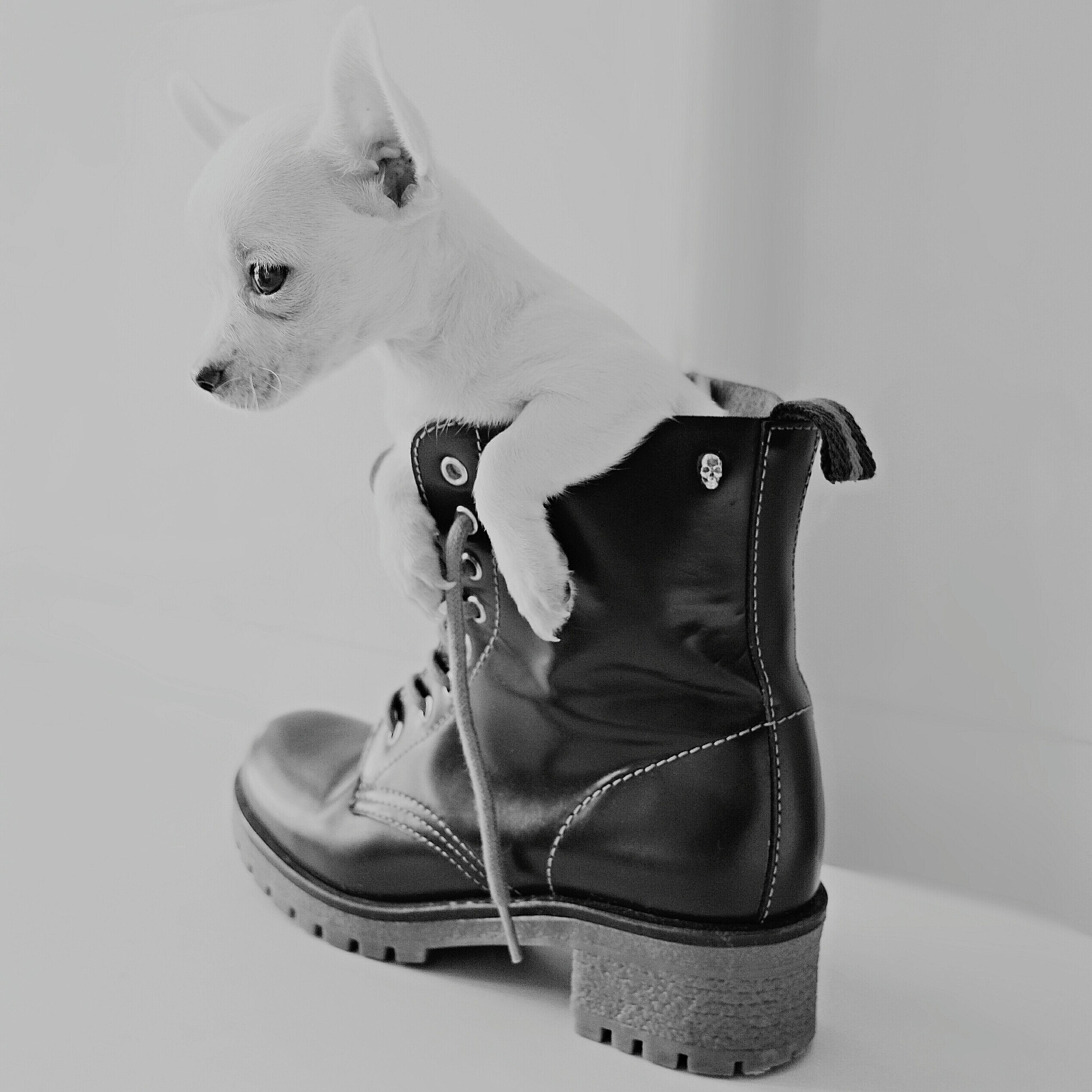 innocence Photographer Photoshoot Pic Shadows Shoot Black Blackandwhite Light Dog Animal Dark Pet Puppy Shooting Light And Shadow Elégance Innocence