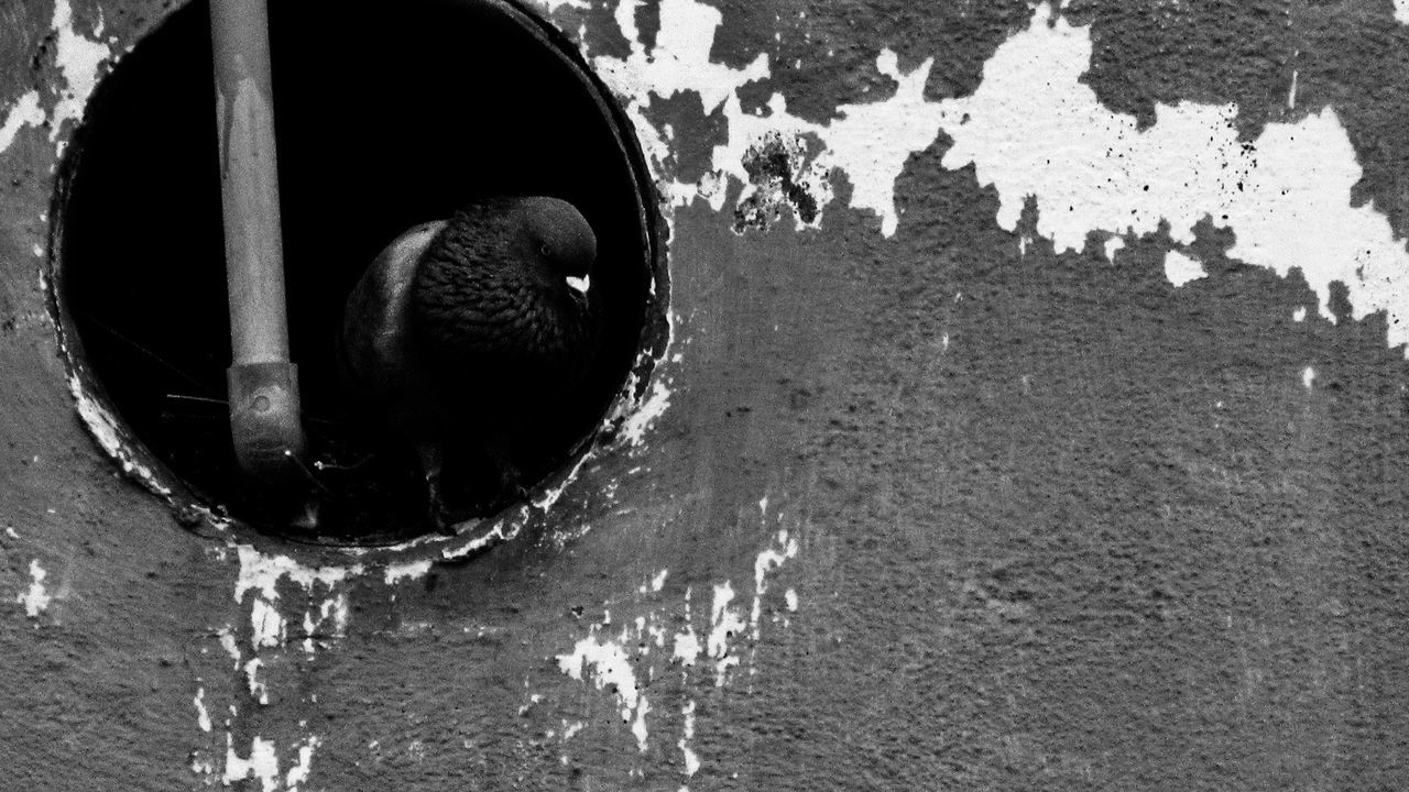 Close-up Day No People Outdoors Animal Themes Nature Pigeons Blackandwhite Pigeonslife Welcome To Black
