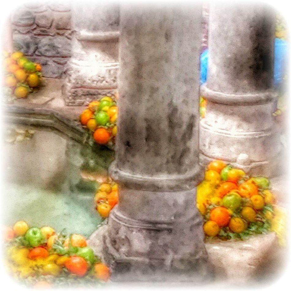 Naturelover_gr Girona Instaflors Tempsdeflors Igersgirona Gironaenamora Gironatempsdeflors Femgironatempsdeflorsambrenault Catalunyagrafias Gaudeix_cat Flowerstagram Clikcat