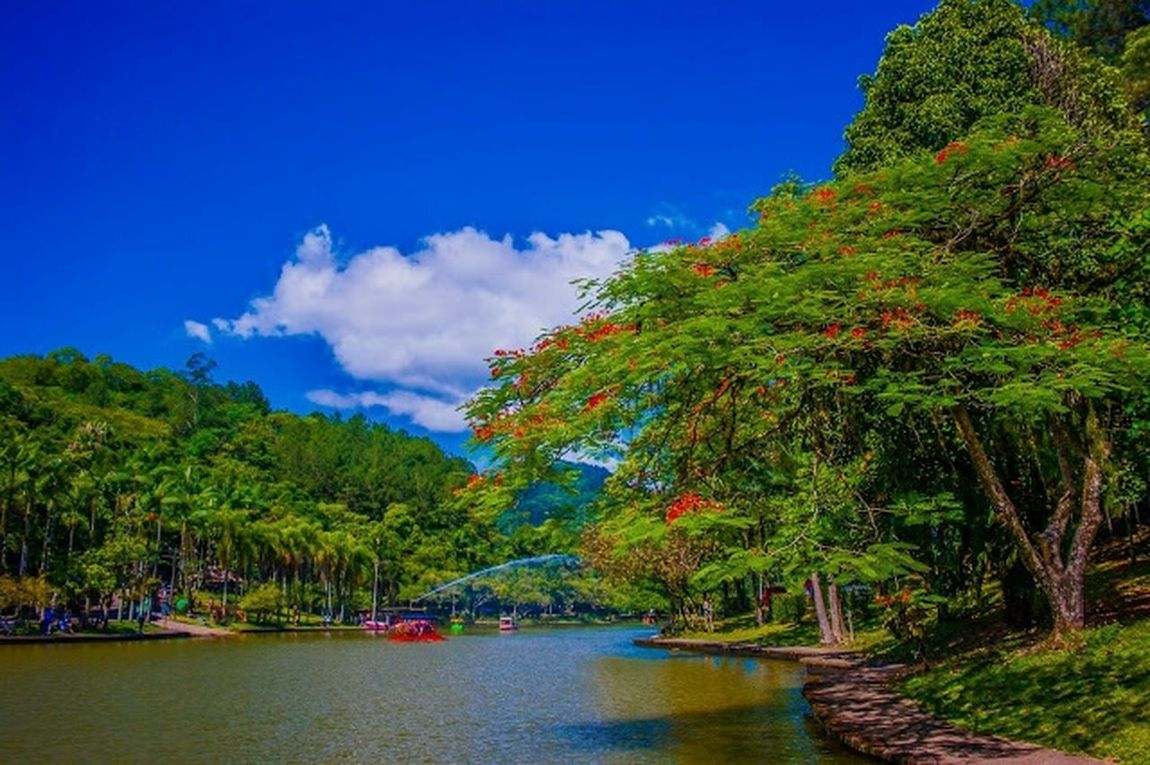 Lago Parque Malwee . Jaraguá do Sul-sc Landscape Nature Water Plant Beauty No People Travel Destinations Beauty In Nature Rural Scene Outdoors Tranquil Scene First Eyeem Photo