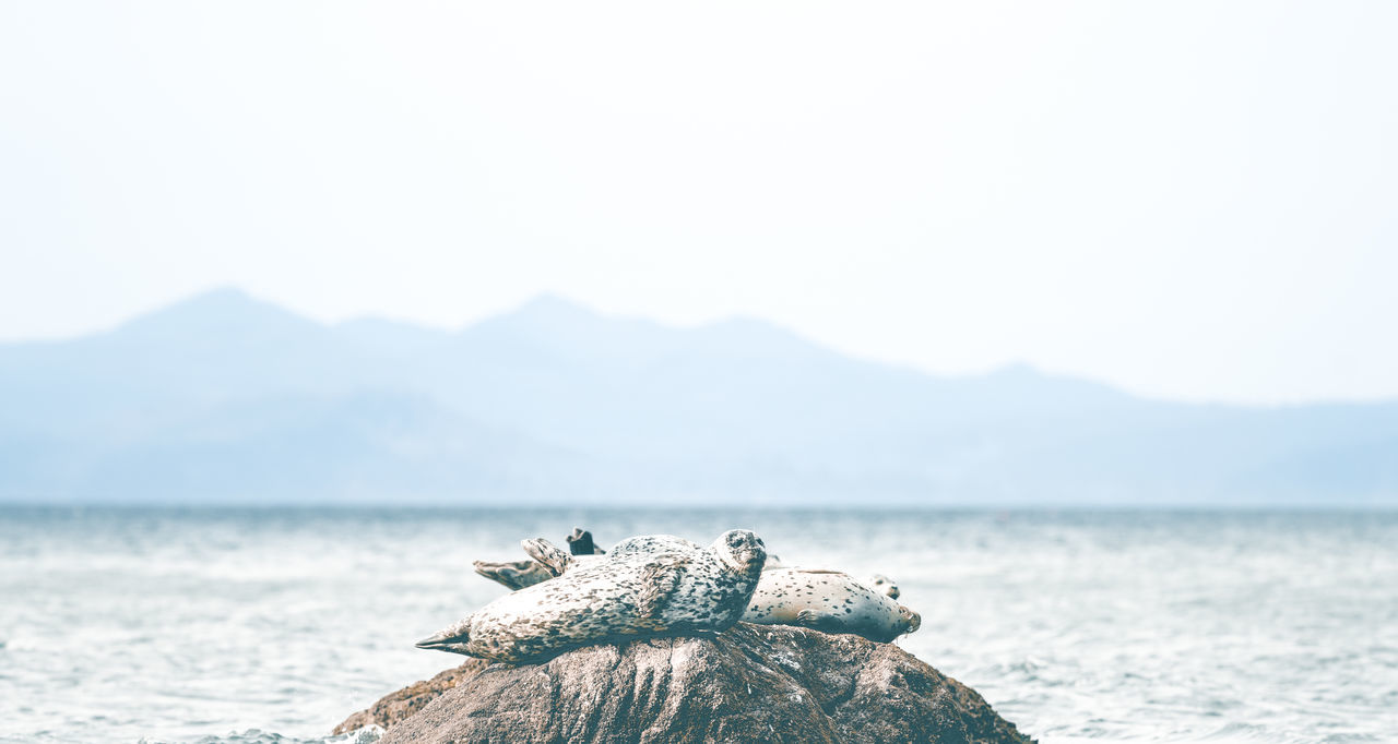 Group of Harbour Seals Beach Beauty In Nature Blue Close-up Coastal Rainforest Day Focus On Foreground Great Bear Rainforest Mountain Nature No People Outdoors Scenics Seals Seals Chilling Sky Tranquil Scene Tranquility Water