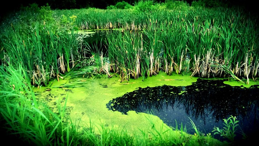 Water Green Nature Picoftheday Sverige Reflection Lake