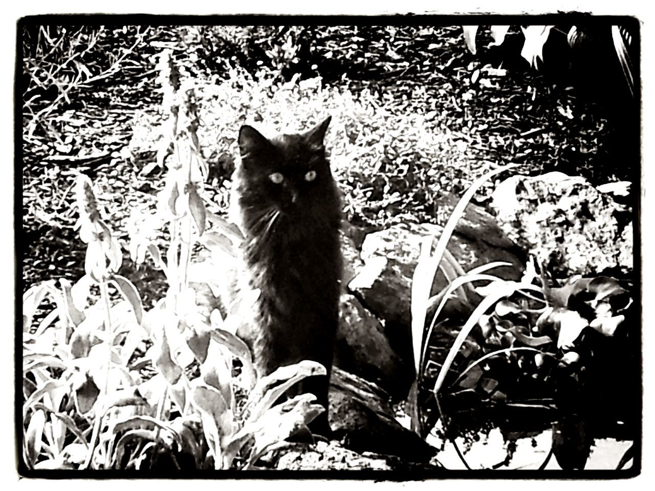 domestic cat, animal themes, pets, domestic animals, mammal, cat, no people, one animal, feline, sitting, portrait, day, looking at camera, outdoors, nature