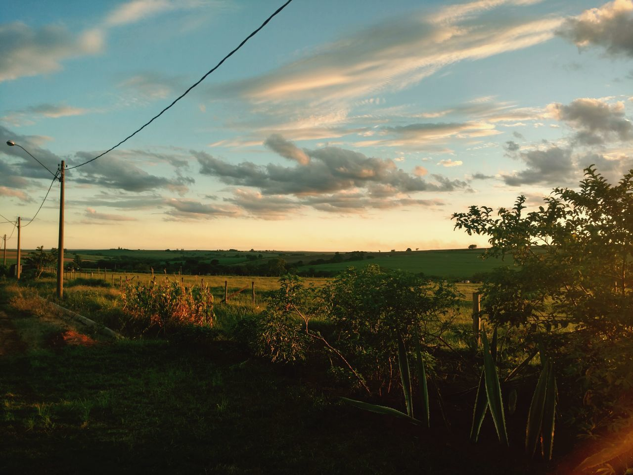 nature, sky, landscape, sunset, scenics, tranquility, field, tranquil scene, agriculture, tree, cable, growth, cloud - sky, no people, rural scene, beauty in nature, outdoors, grass, day