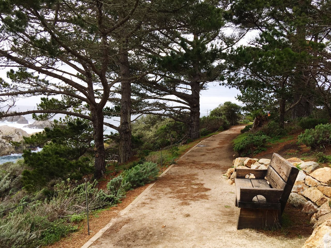 Bench Park Bench Trail Path Point Lobos Carmel-by-the-sea California United States California Coast California State Parks Pacific Pacific Ocean Ocean Cliff