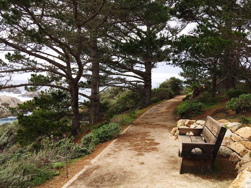 Bench Park Bench Trail Path Point Lobos Carmel-by-the-sea California United States California Coast California State Parks Pacific Pacific Ocean Ocean Cliff