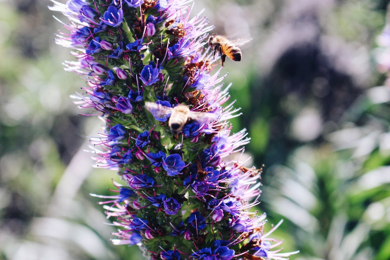 flower, purple, nature, beauty in nature, fragility, day, growth, freshness, one animal, insect, no people, animal themes, outdoors, bee, animals in the wild, close-up, plant, pollination, springtime, animal wildlife, flower head