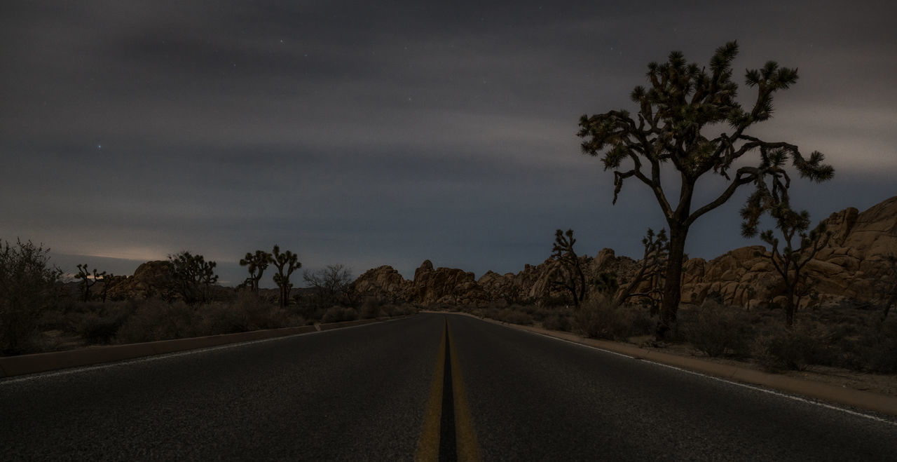Low light capture inside the Joshua tree national park at night, low angle road capture Beauty In Nature California Joshua Tree Joshua Tree National Park Landscape Nature Night Night Photography Nightphotography No People Outdoors Road Road Sign Scenics Star - Space The Way Forward Tree