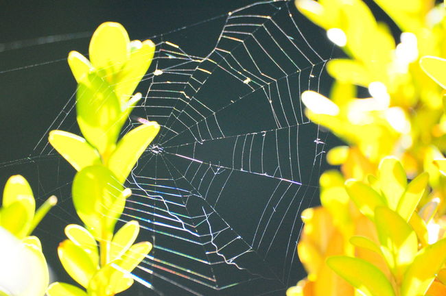 Spinnennetz Spider Spinnennetz Macro Check This Out Chrixxo Hanging Out Photo Of The Week No People Hello World Life Animals Insects  Sun Green Taking Photos Nature Enjoying Life Bestoftheday