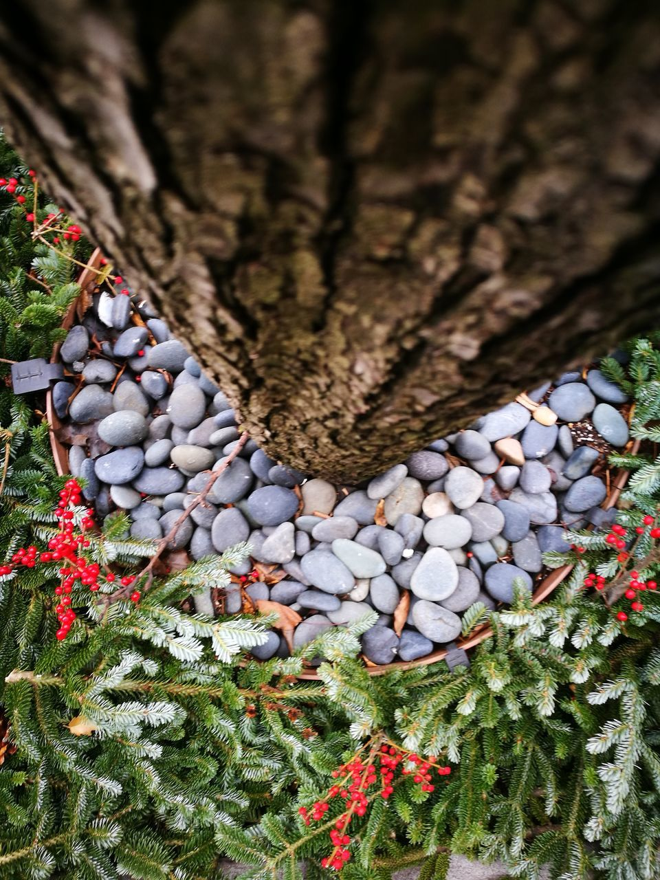 no people, outdoors, nature, pebble, day, close-up, tree, beauty in nature