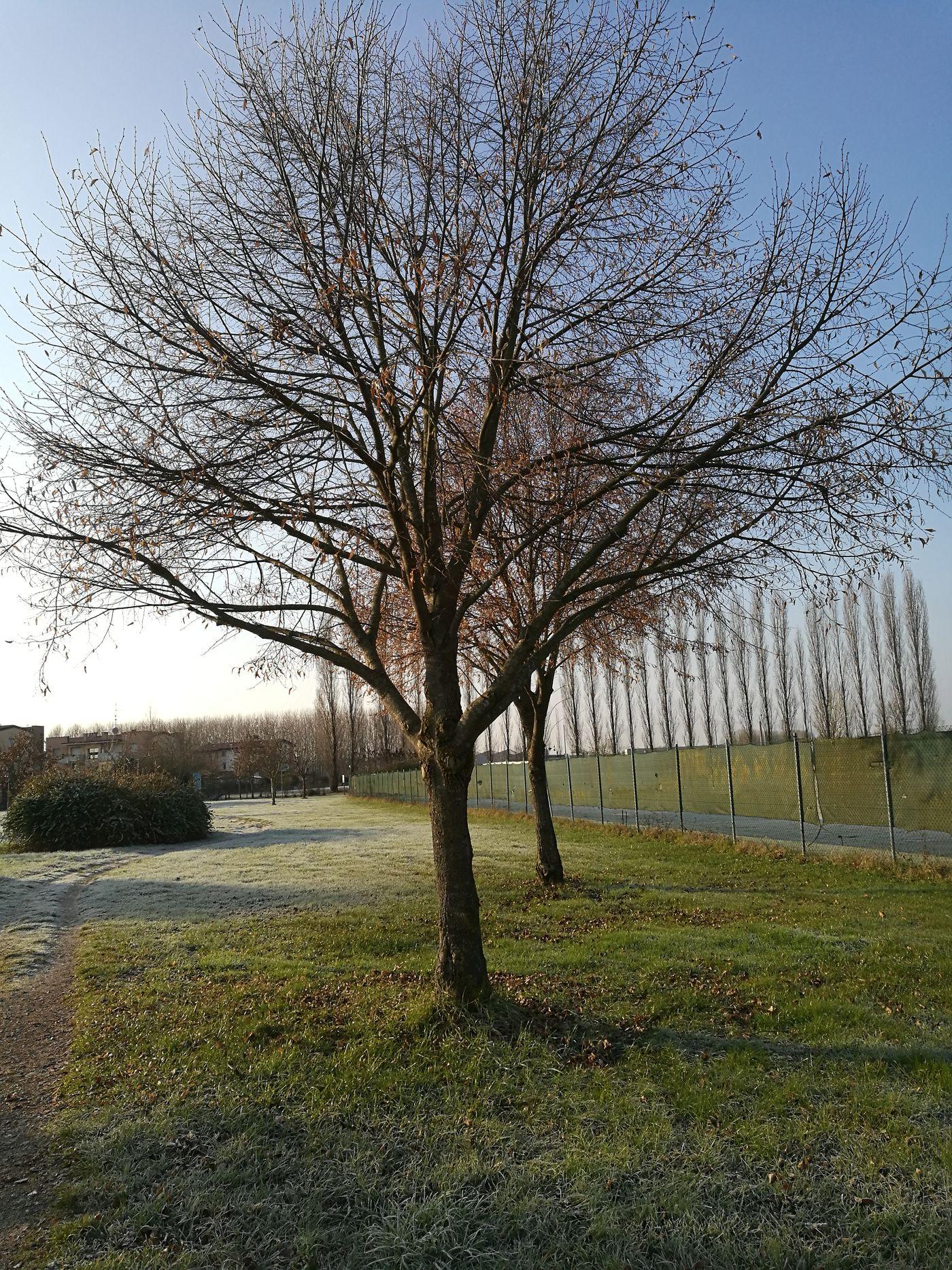 Nature In Bologna