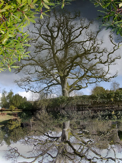 Beauty In Nature Branch Growth Landscape Mirror Image, Reflection, Reflexion Nature No People Outdoors Reflections In The Water Tranquility Tree Which Way Up