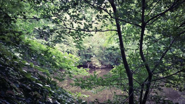 Sommer Naturelovers Pflanzenwelt Frankfurt Am Main Naturpur Nurianer Waldspaziergang Frankfurter Stadtwald Jakobiweiher Vogel