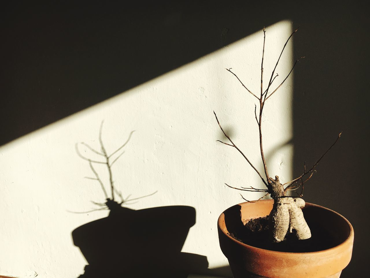 Still Life Dead Plant No Leaves Shadow Minimalism Ginseng Minimalobsession Light And Shadow Plant Indoors  Nakedtree Winter