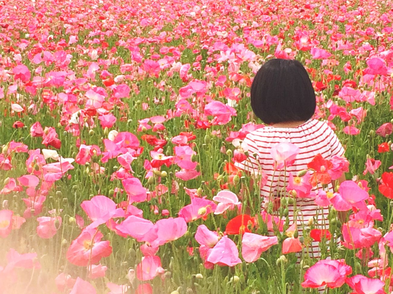 IPhoneography Poppy Landscape EyeEm Nature Lover Flowerporn Enjoying Life Taking Photo Snapshots Of Life 買い物ついでに寄ったから、カメラ持ってませんでした…残念すぎるーヽ(;▽;)ノ