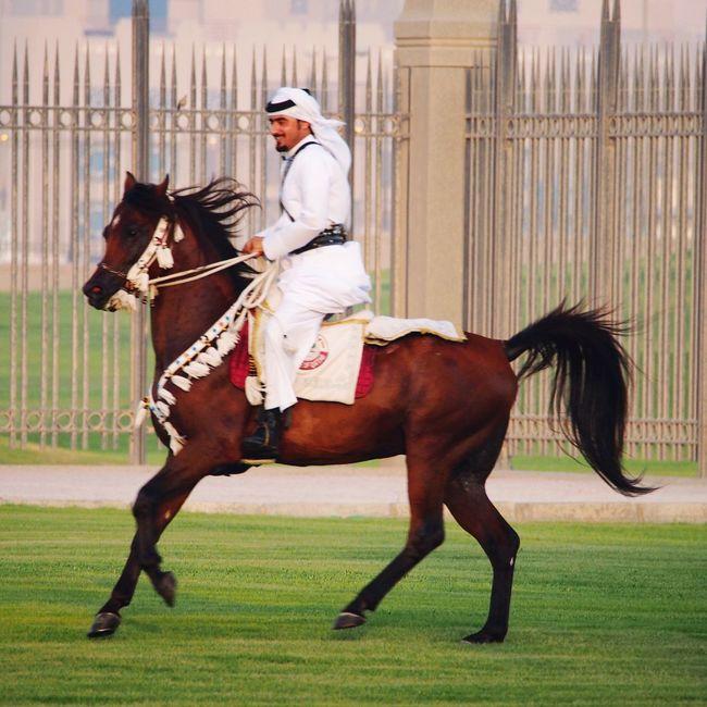 Qatarlife Horses Arabian Horse Doha Corniche Cavalry Dohalife