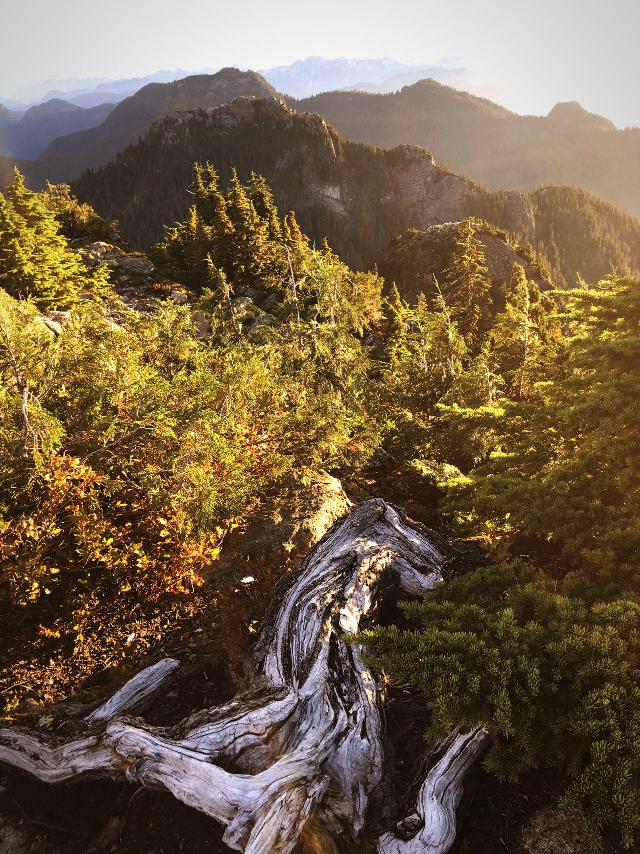 Mountain View Mountain Tree Nature Tree Trunk Fallen Tree