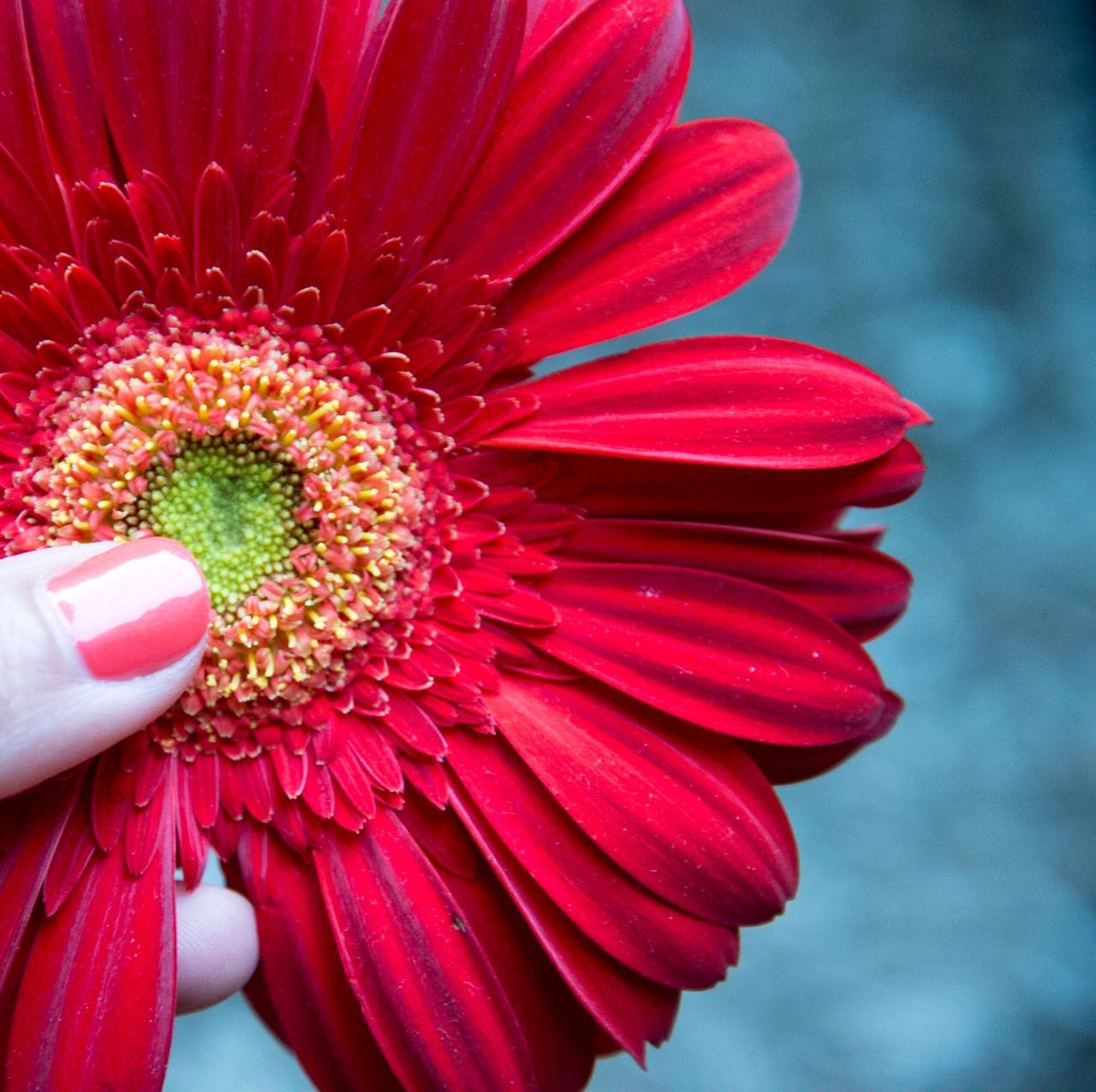 Close-up Red Flower Nails Cosmetics Flower Petal Female Hands