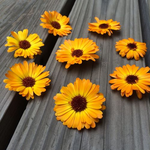 Calendula Edible Flowers Flower Circle Flower Grid From Our Garden Gardening Herbalmedicine Play With Flowers
