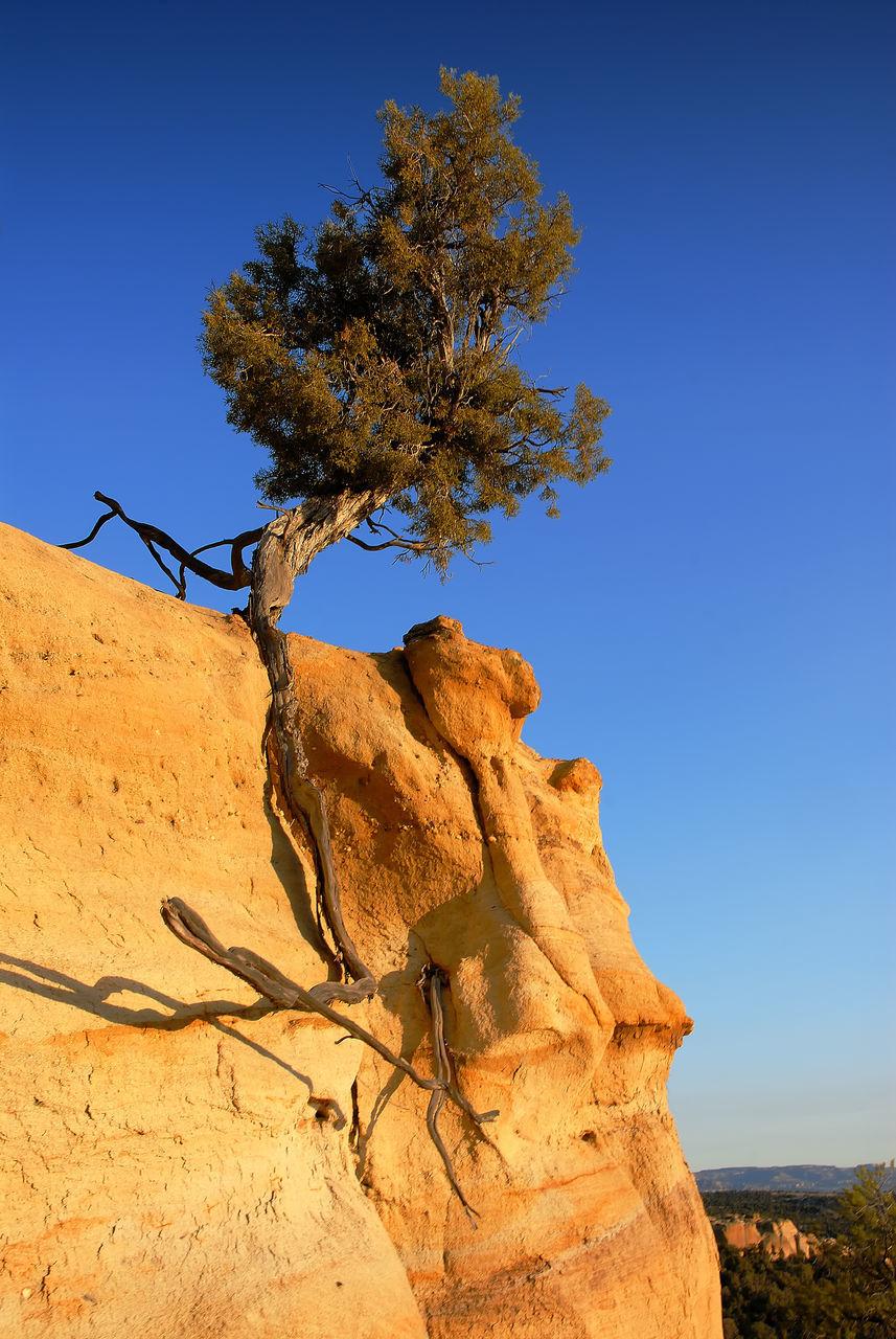 Tree On Rock In Desert Against Clear Blue Sky