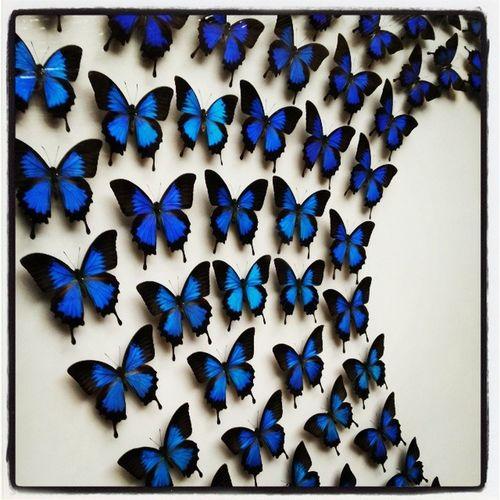 Art Preservedanimal Butterflies