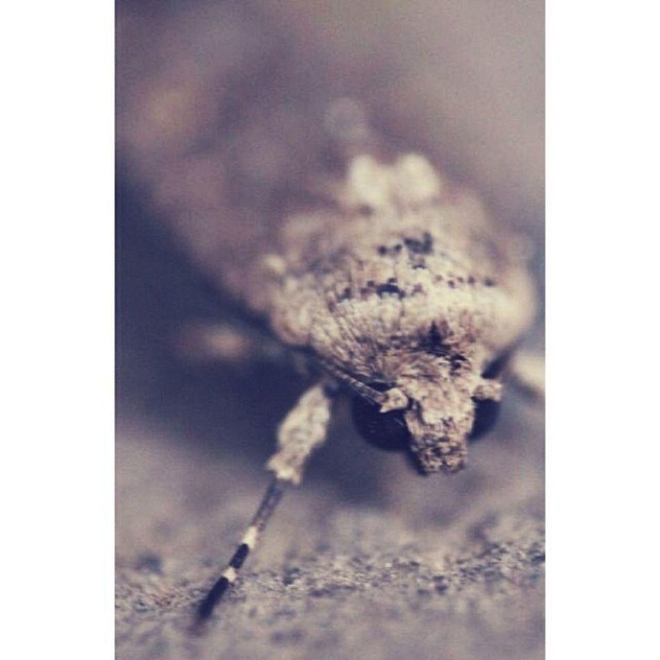 يافراشه أبت الأزهار أن تفتح ..حداداً على غيابها - وجههَ الفراشة الصغيره رعب '( - جرررح عميييق - ?? تصويري  كانون Canon فراشة
