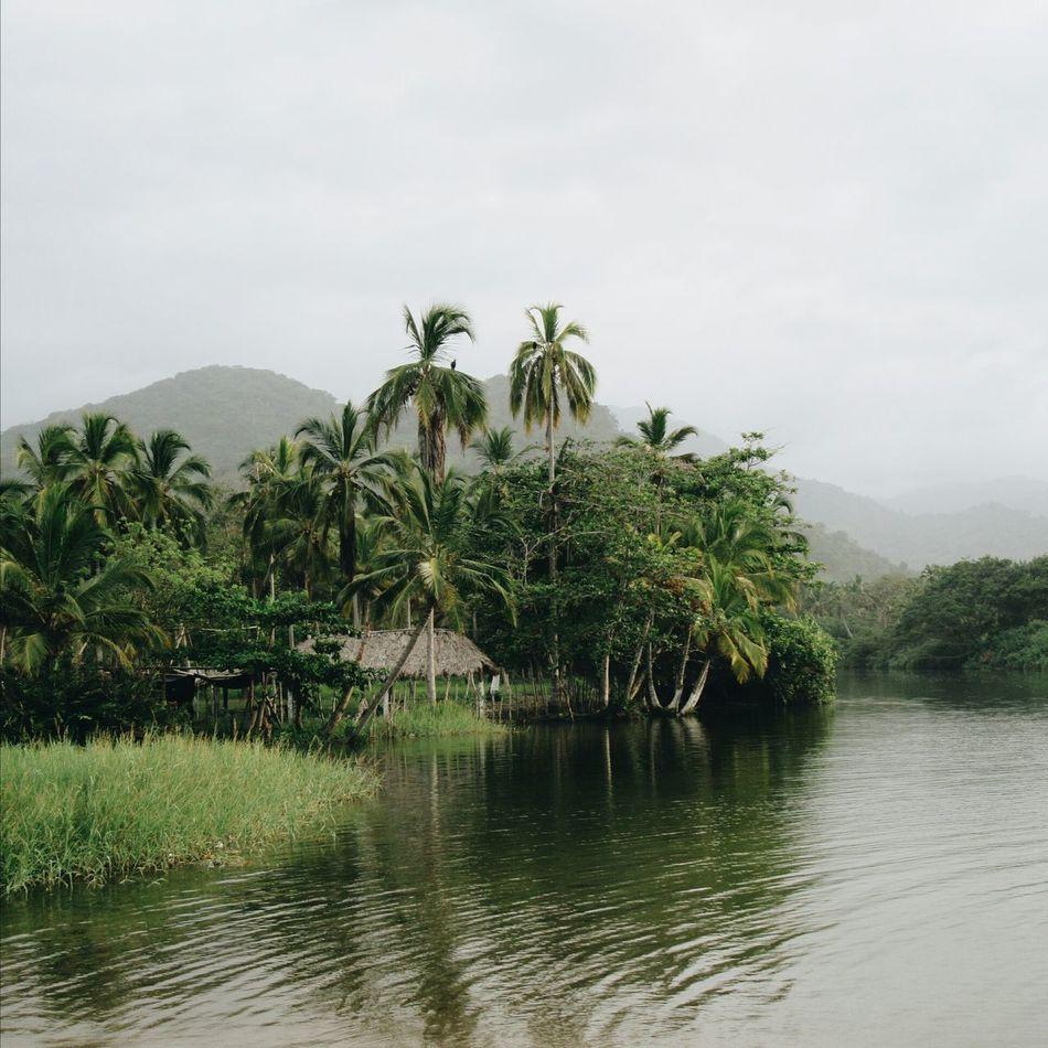 In the Colombian jungle Colombia Santa Marta Caribbean Jungle Beach Palm Tree Coconut Tree Wild Life First Eyeem Photo