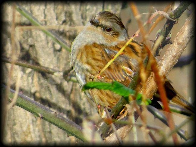 Sparrow with Tender Glance in a Peaceful Moment