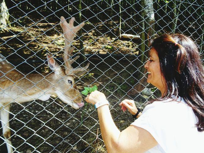 Eyeemphoto Deer Moments Deer Animal Animal Food Eyemphotography EyeEm Best Shots - Nature Eye4photography  EyeEmBestPics EyeEm Best Shots EyeEm Gallery Photography Photos Around You People People Photography