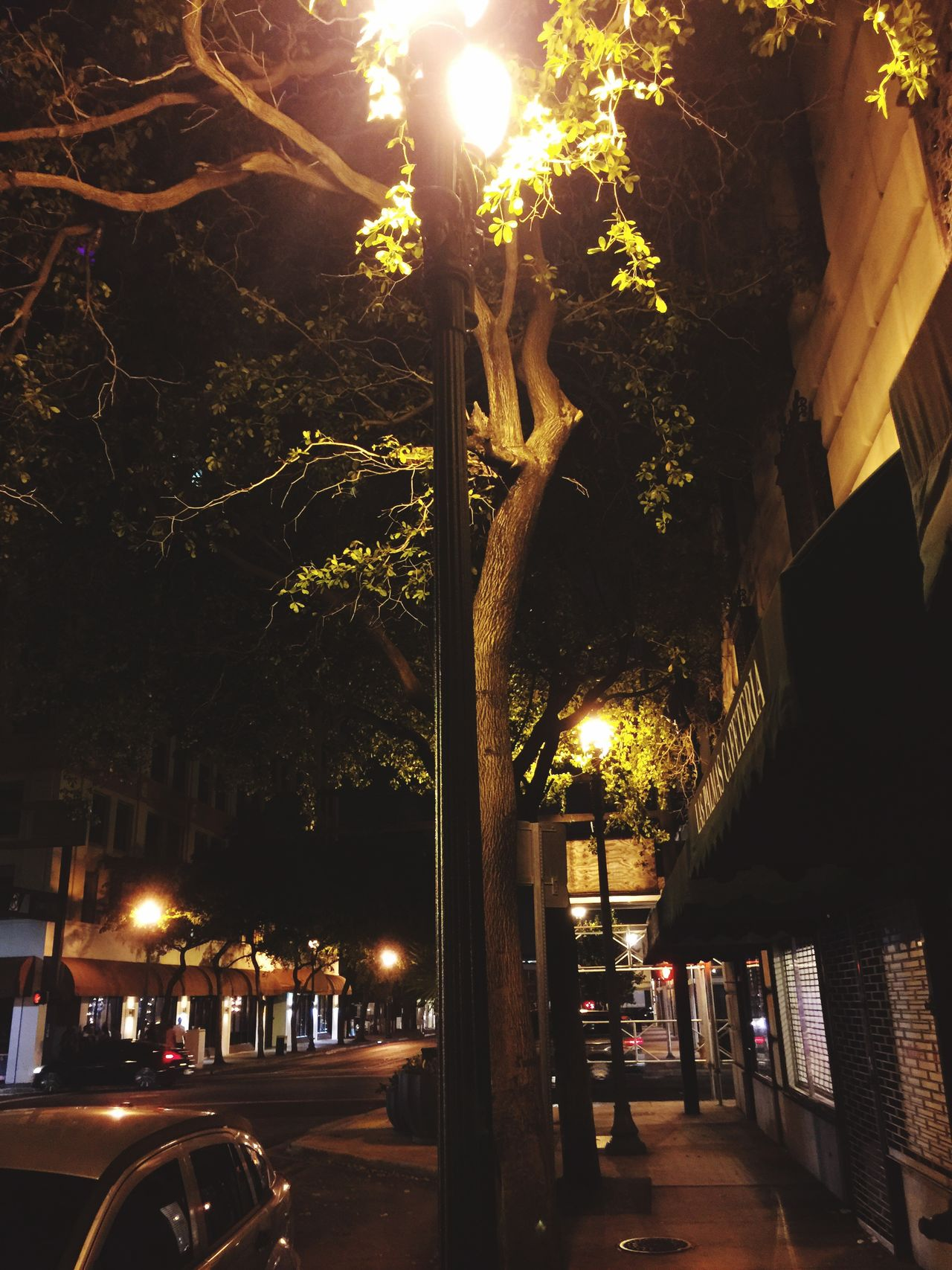 Illuminated Night Tree Outdoors Architecture Building Exterior Built Structure No People Nature City Streetphotography City Street Desolate