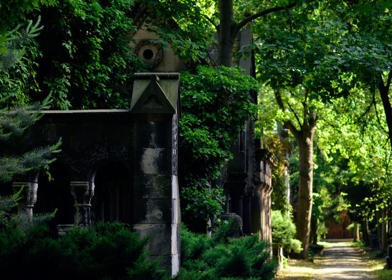 Built Structure Cemetery Cmentarz Cmentarzżydowski Green Color Nature Place Of Worship The Way Forward Tomb Tranquility