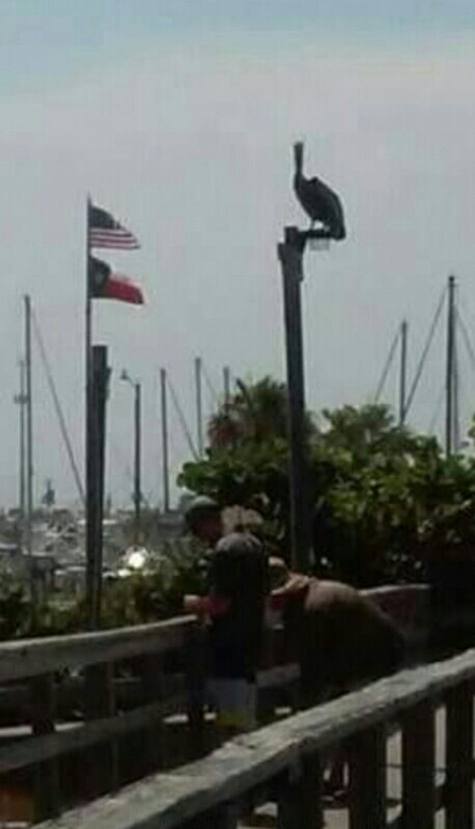 Port Aransas near ferry. It was a beautiful place on a gorgeous day! Capture The Moment Enjoying The ViewBird Flags Hanging Out Beauitful Day Happy People Bird Photography Coastal Life Salty Air Taking Photos Enjoying The Sights Friendly Faces