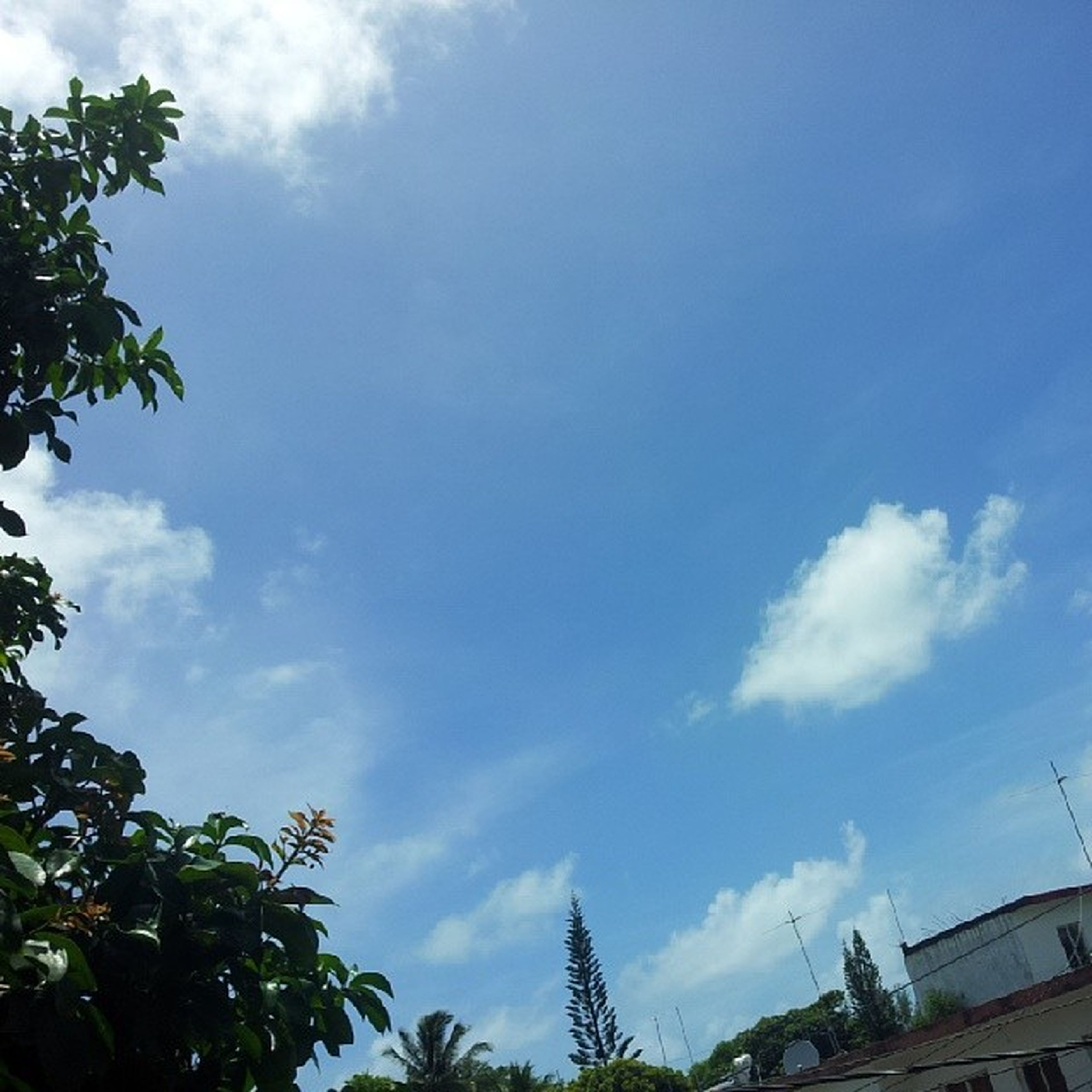 low angle view, sky, tree, cloud - sky, cloud, blue, building exterior, built structure, architecture, cloudy, nature, growth, day, outdoors, high section, no people, branch, beauty in nature, tranquility, house
