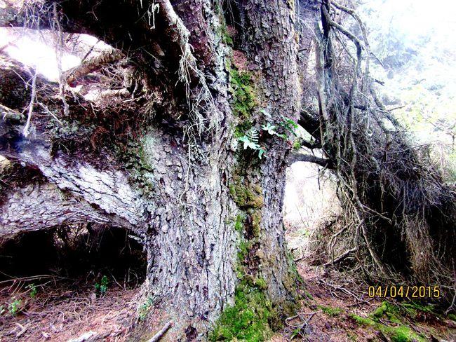 Tree Porn Nature Bridges Landscape Creepy Cool