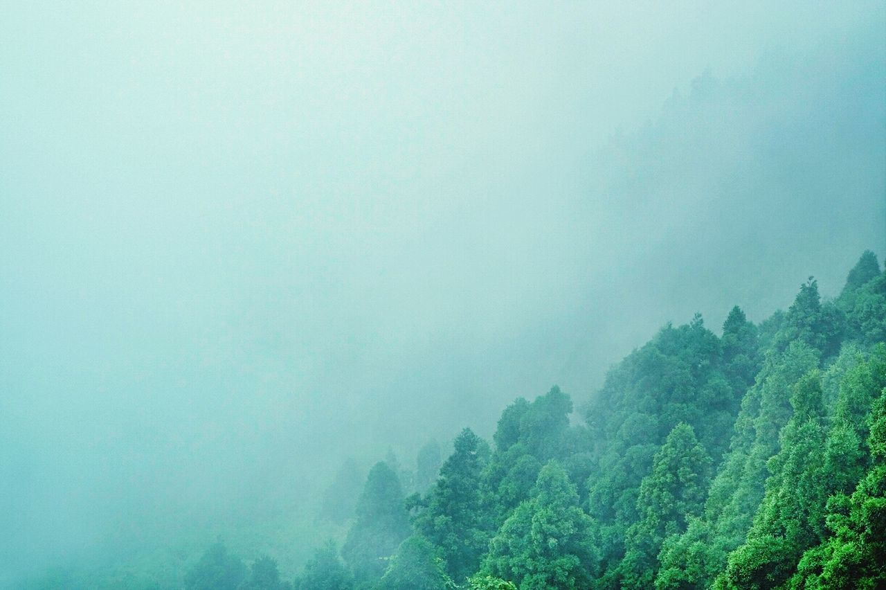 Beautiful stock photos of china, Beauty In Nature, Day, Fog, Forest