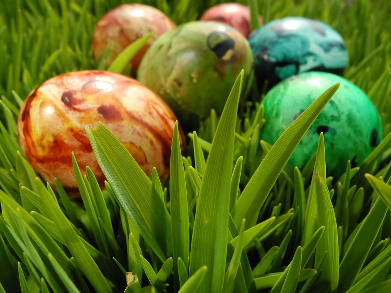 Food Eggs Easter Grass Taking Photos Easter Ready
