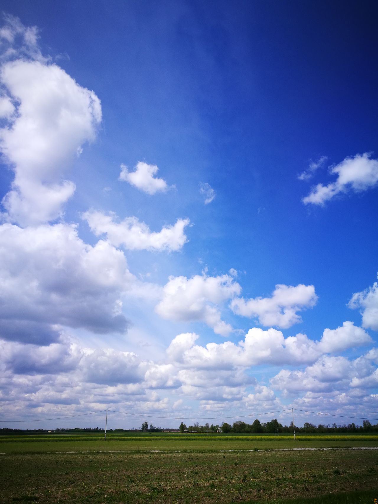 Field Cloud - Sky Agriculture Growth Rural Scene Day Crop  Nature Sky Beauty In Nature No People Summer Fragility Landscape Outdoors Cereal Plant Freshness
