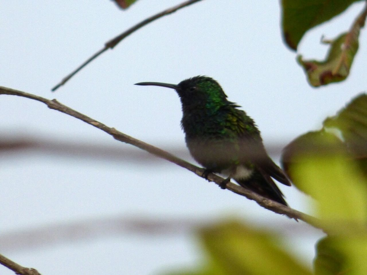 En el balcon de mi apartamento. Hummingbird Colibris Birds Birds🐦⛅ Pajaros Aves