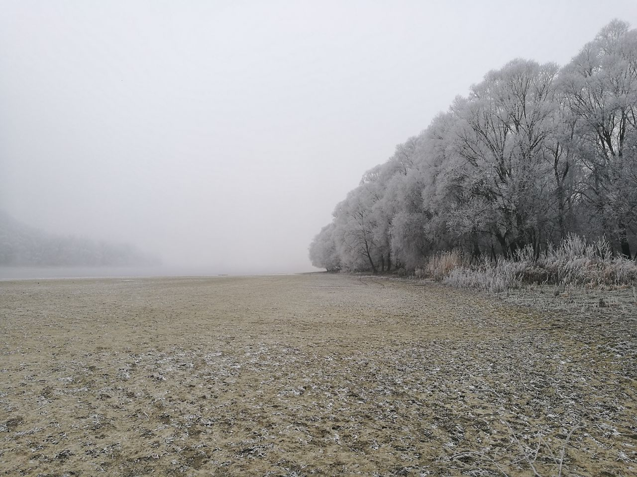 Fog Nature Beach Outdoors Freezing Winter Trees Freezing ❄ Winter Wonderland Freezing Cold Freezingweather Wintertime Winter Foggyweather Foggyday No People Nature Tree Beauty In Nature Landscape