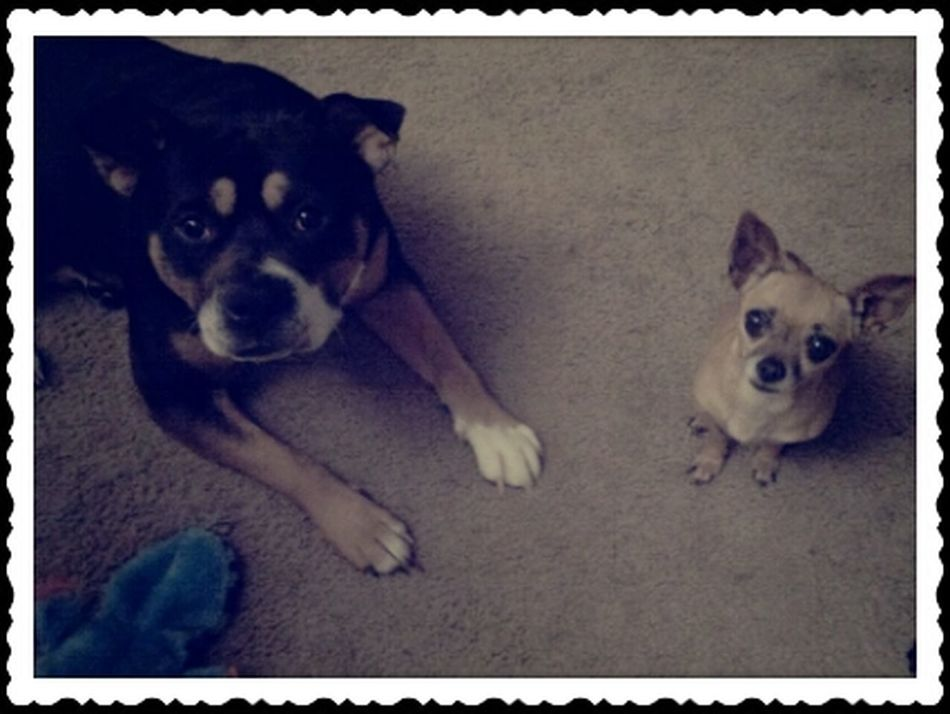 Everytime I Let Them In They Wants Treats.. #ilovethembotj