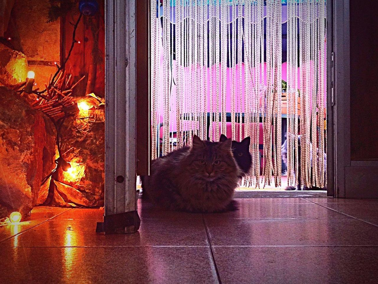Stray Cats Stifanibrothers Warmth Cats Of EyeEm Christmas