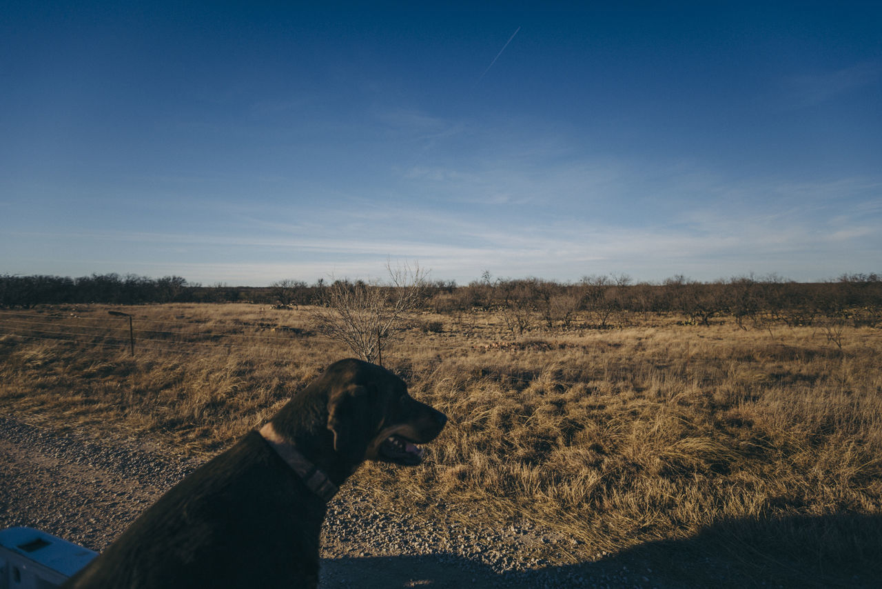 Animal Themes Beauty In Nature Day Dog Domestic Animals Field Grass Landscape Mammal Nature No People One Animal Outdoors Pets Sky